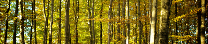 banner_trees